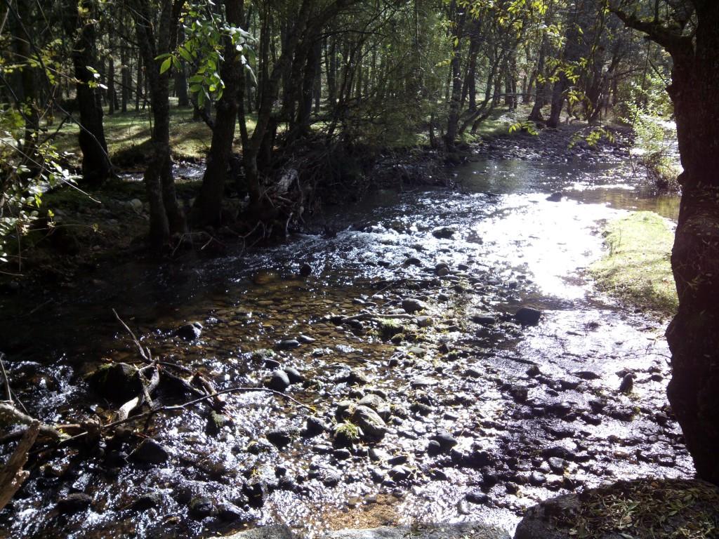 Río Eresma - Sol y agua - Sendero de los reales Sitios