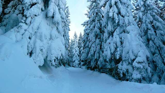 ¿Has probado el Esquí de fondo? | HCMN