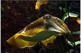 El calamar, mucho más que comida de chiringuito | HCMN