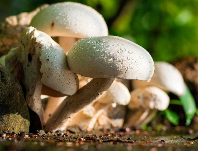 Recetas con setas de temporada, un manjar de otoño | HCMN
