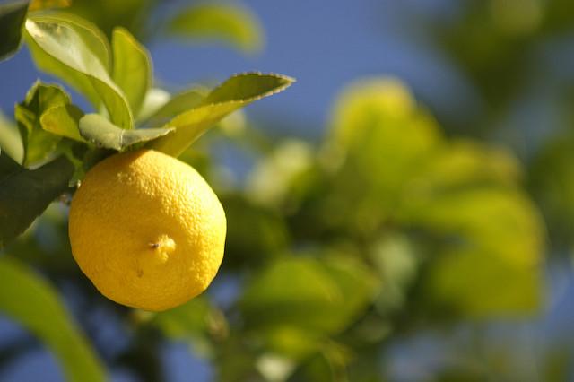 Propiedades y Beneficios del limón y su zumo | HCMN