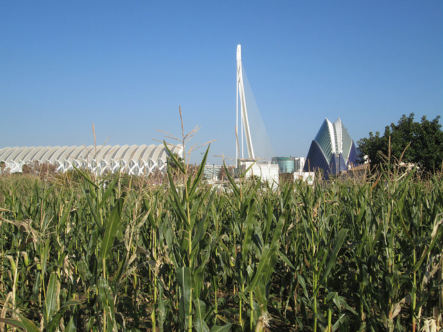 Valencia capital mundial de la alimentación 2017 ¿Sabes por qué? | HCMN