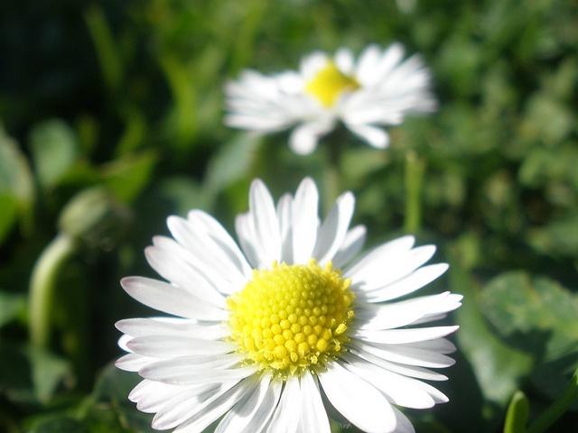 Tratamiento para combatir la astenia primaveral | HCMN