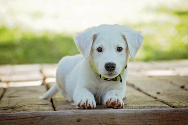 Tenemos nuevo miembro en la familia: como cuidar a un perro | HCMN