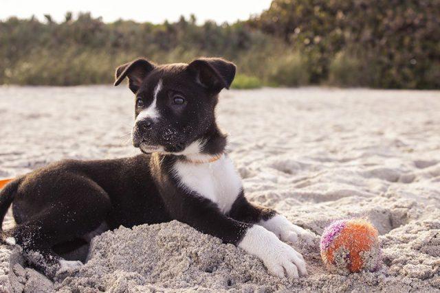 Mi perro está triste, ¿será depresión? | HCMN