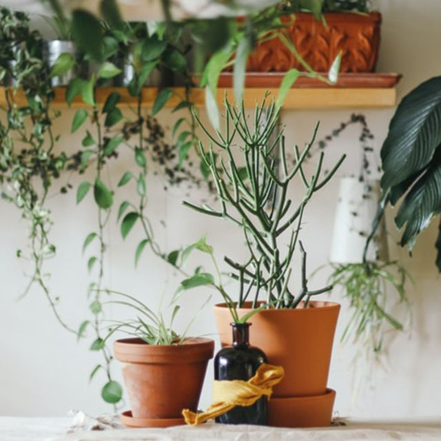 Cómo cuidar tus plantas de interior | HCMN