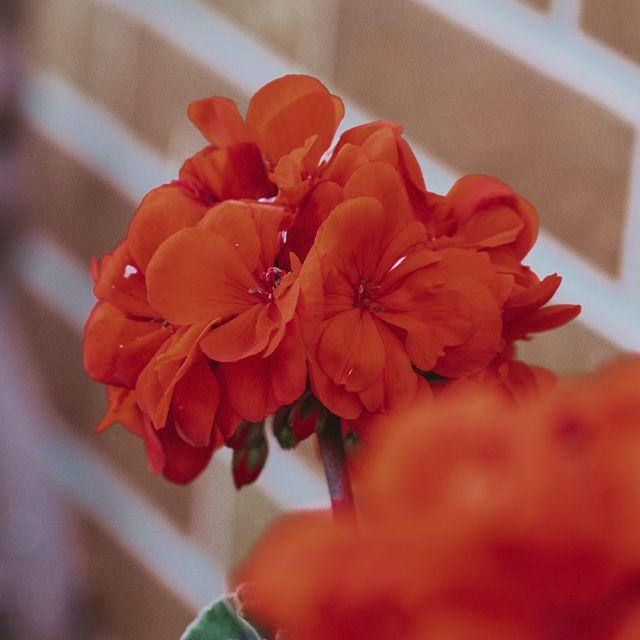 flores en invierno | HCMN
