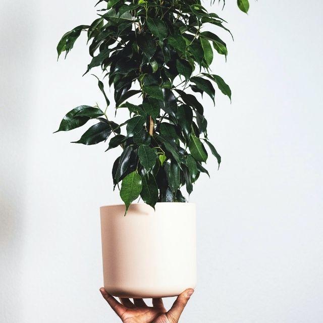 plantas de interior | HCMN