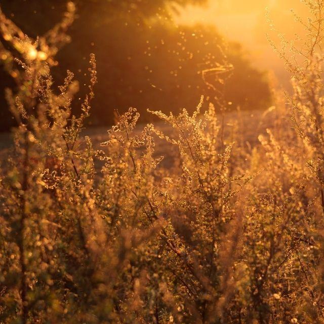 alergias más comunes | HCMN