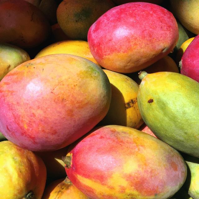 mango   HCMN